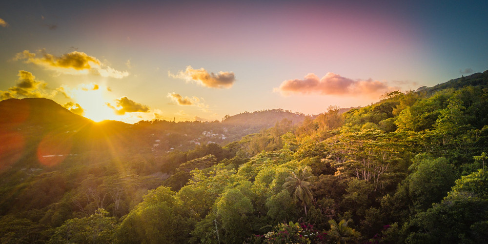Photo of trees during golden hour, Seychelles