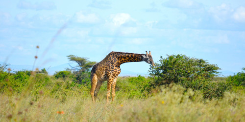 16 reasons why you should travel to Kenya right now
