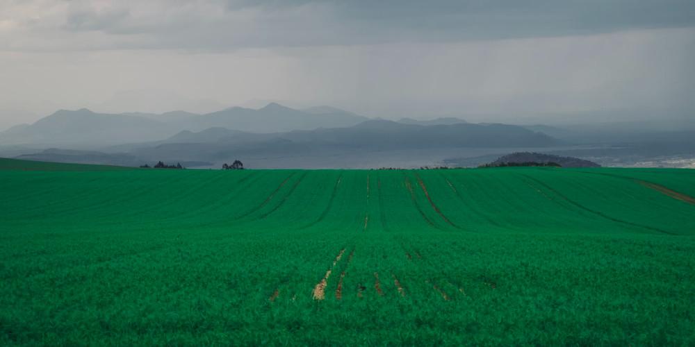Green grass field, Equatorial Guinea