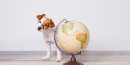 How To Travel With Pets: Ultimate Guide?