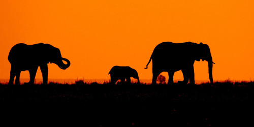 13 reasons why you should travel to Botswana right now