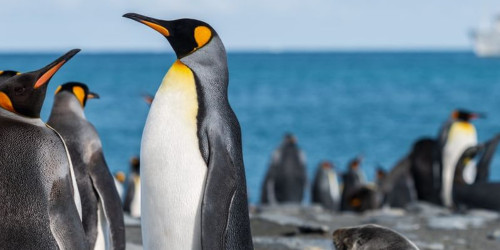 10 reasons why you should travel to South Georgia and the South Sandwich Islands right now
