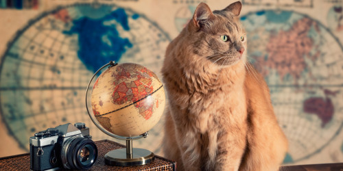 How to travel internationally with a cat?