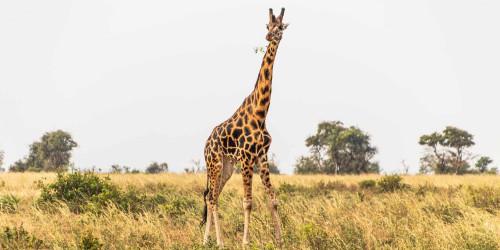 10 things I wish I knew before going to Uganda