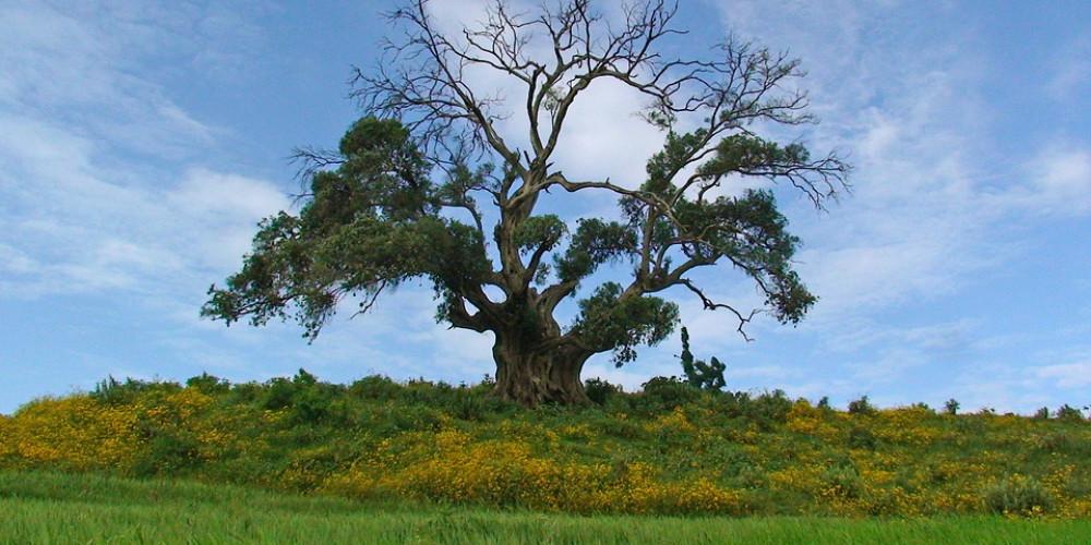 Tree nature landscape grass wood, Ethiopia