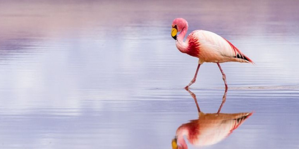 Flamingo in Santa Cruz de la Sierra