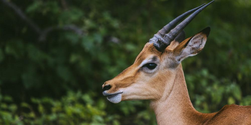 National Park, Nigeria