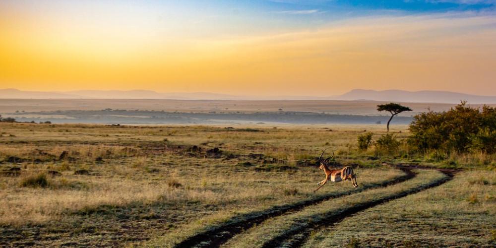 Antelope Running, Banjul