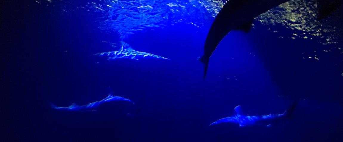akvarium chikago