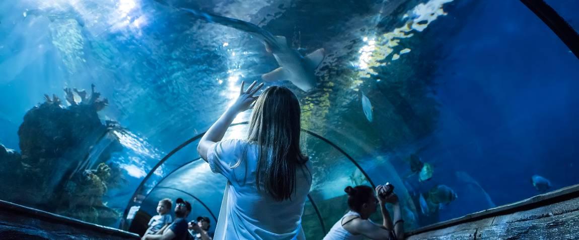 aquarium at the island of malta