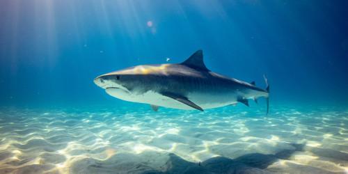 Flying shark in Oxford