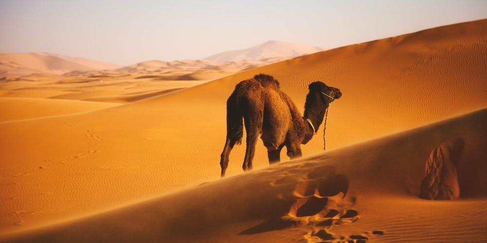 desert, Western Sahara