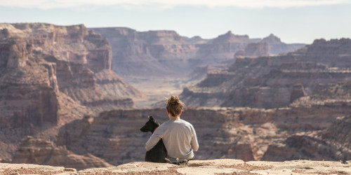 How to travel with pets?