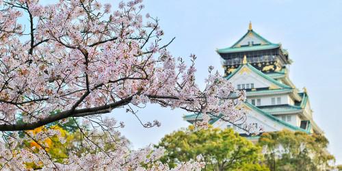 Magic of hanami in Japan