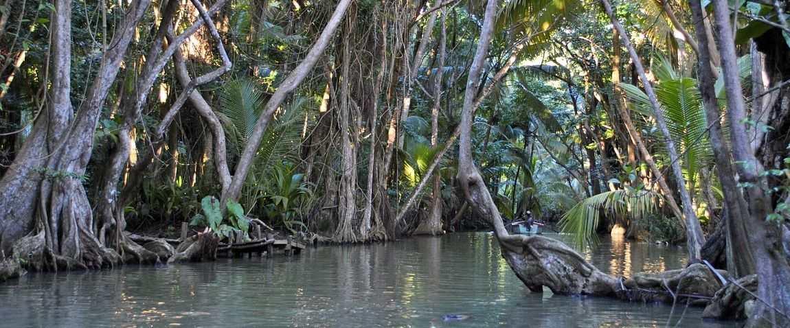 dominica jungle