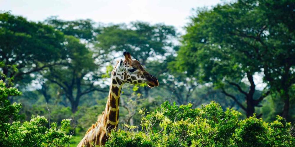 Murchison Falls Uganda, Uganda