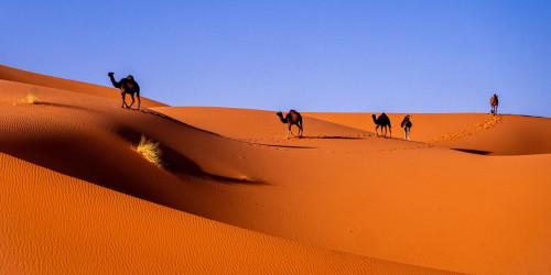 Most interesting facts about Western Sahara