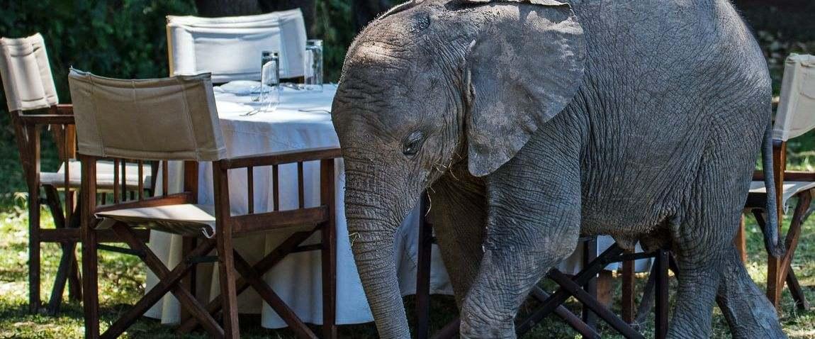 elephant table nature