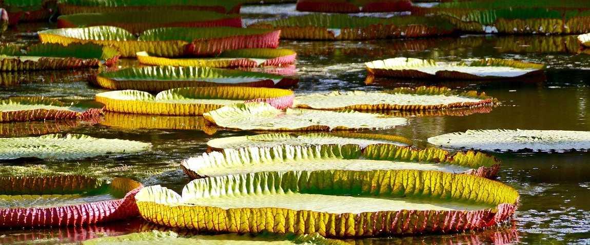 mauritius flora