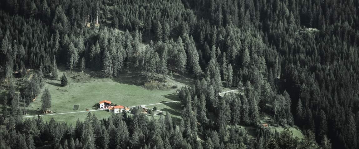 austria forest
