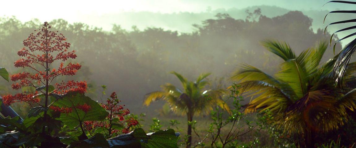 nature of guyana