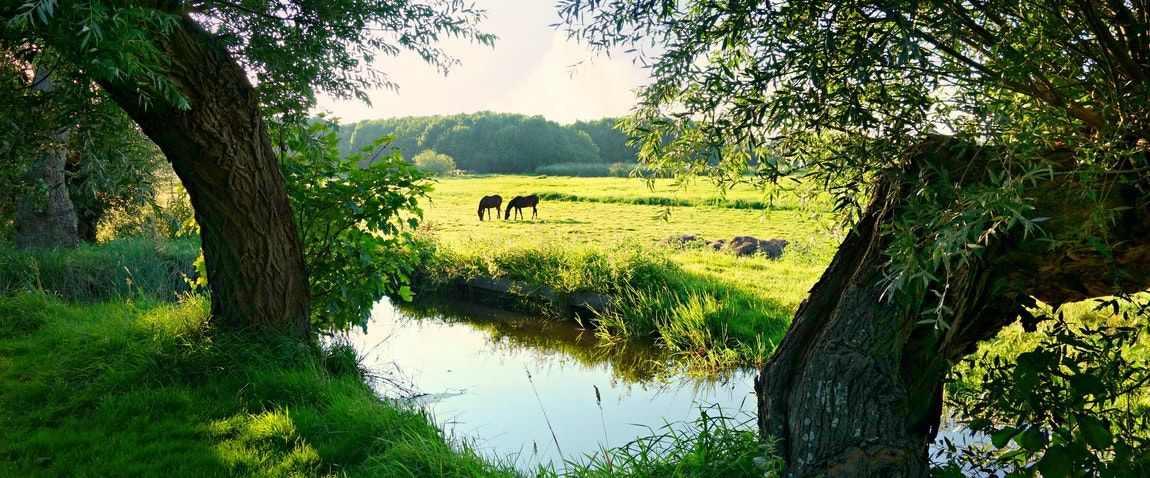 nature of netherland