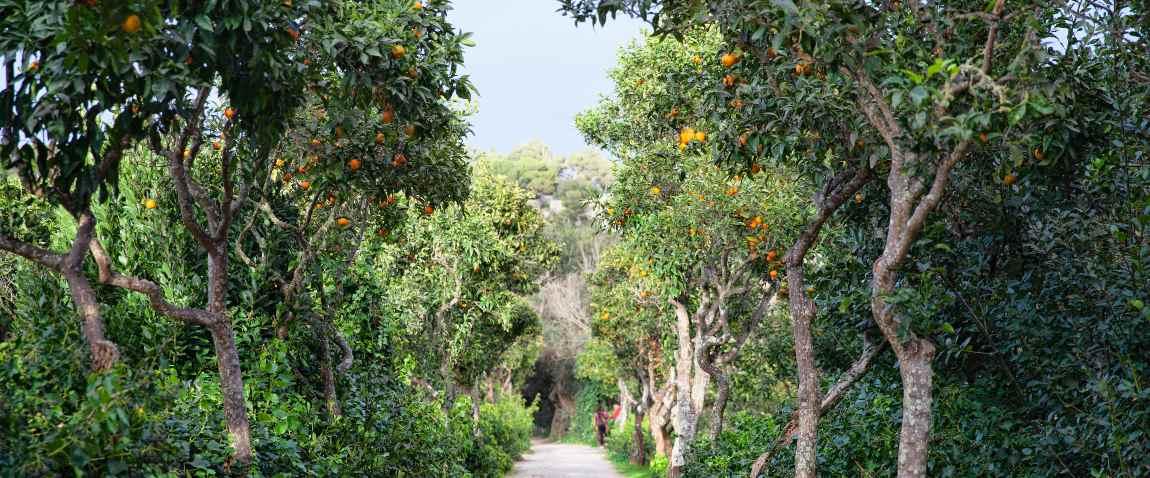 buskett garden
