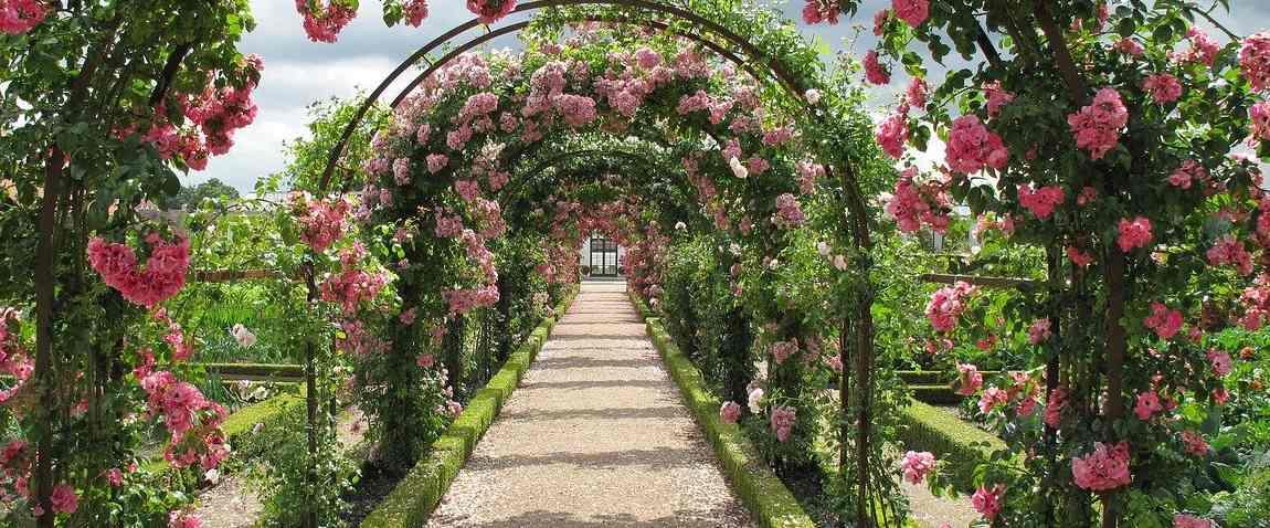 princess grace rose garden