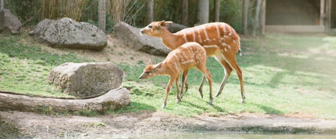 san jose zoo