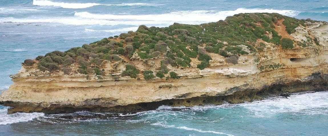shag island