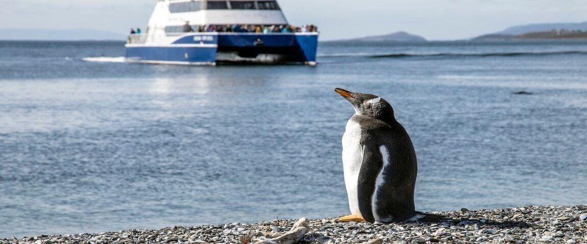 ship and penguen