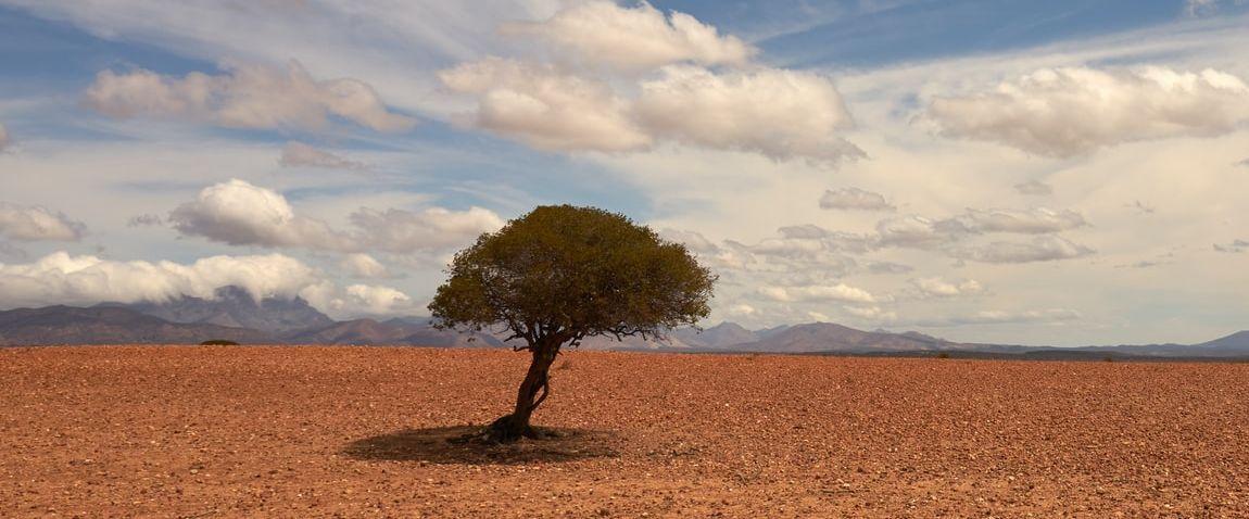 tree in Niger