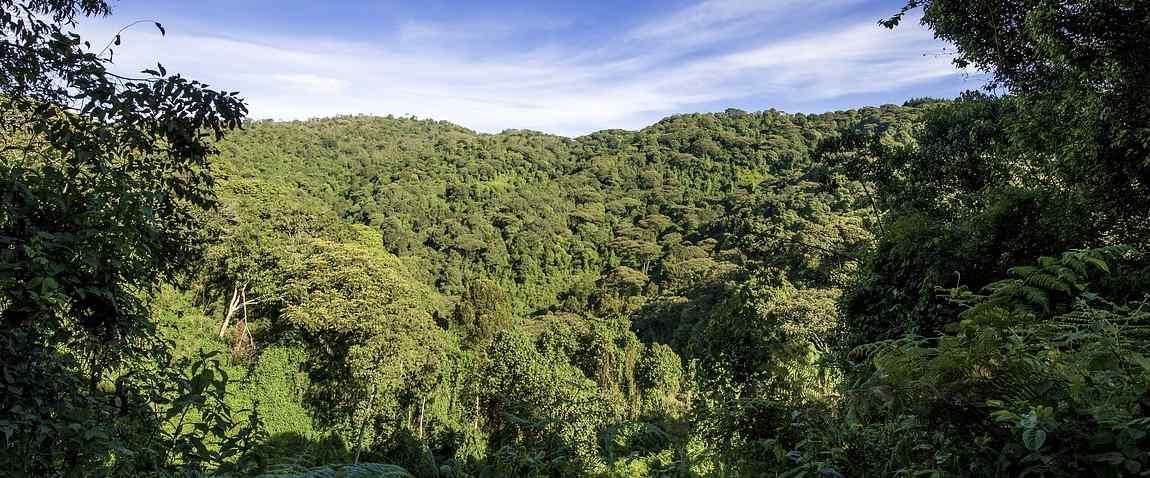 uganda jungle