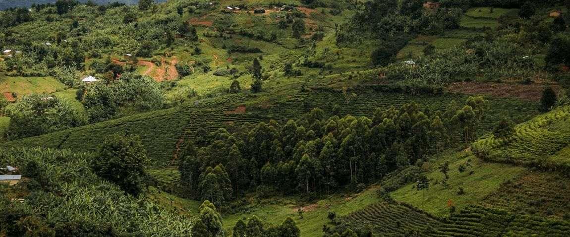 nature of uganda