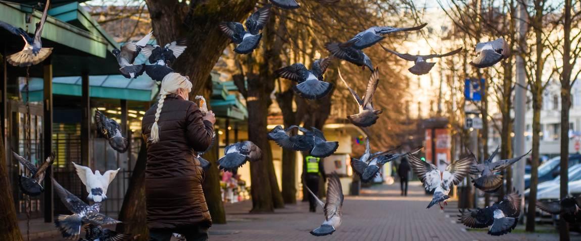 woman feeds pigeon birds