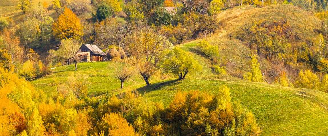 slope meadow in carpathian mountains