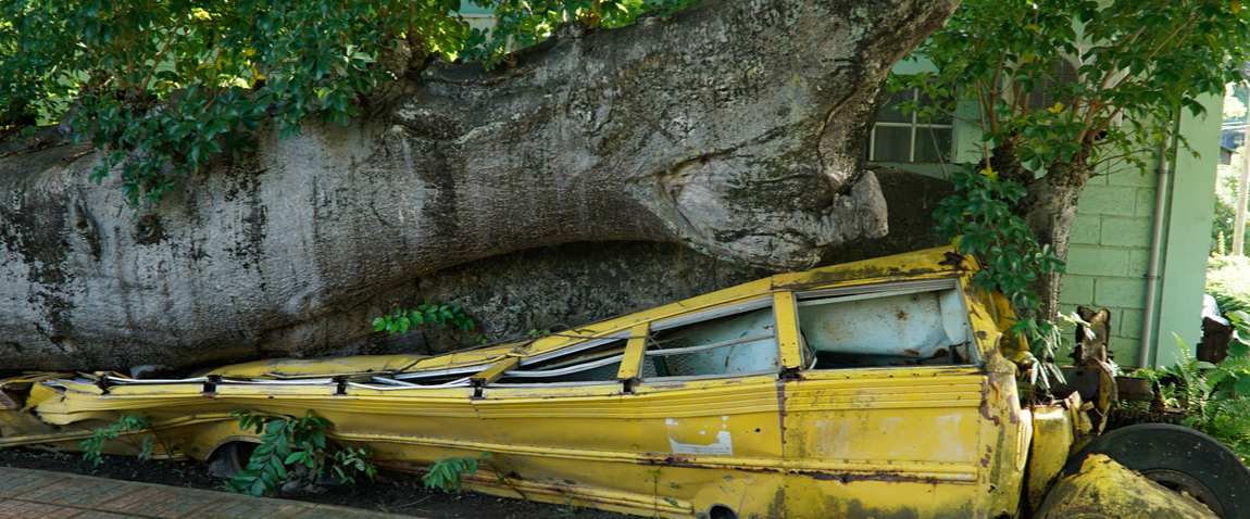 abandoned school bus crushed under tree trunk in botanical garden
